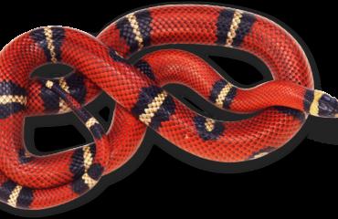 Plumber Snakes